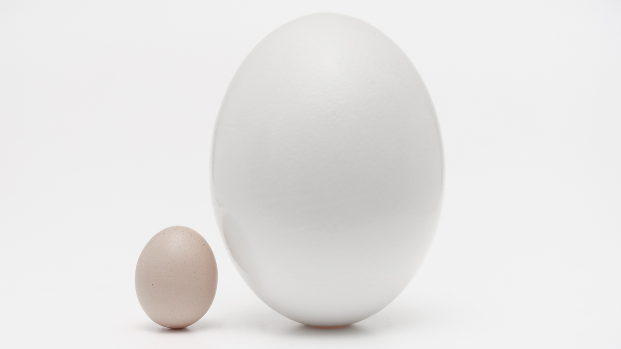 MediaAnalyzer-Studien-Anzeigenformate-Werbewirkung-Anzeigen-klein-gross-im-Vergleich-Eier