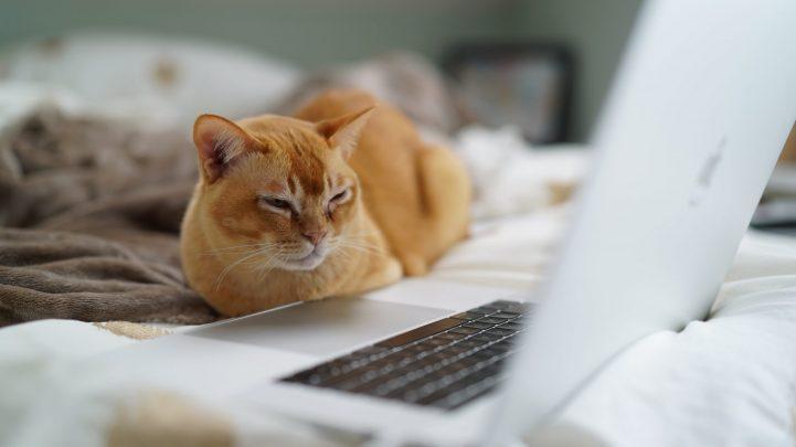 MediaAnalyzer-Studien-Online-Spots-Katze-Bett-Macbook